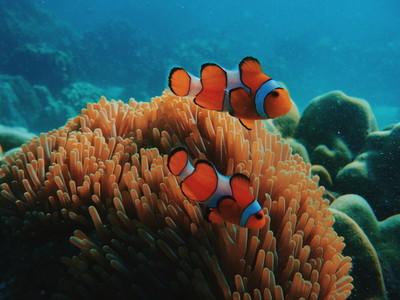 Nemo fish  Honeymoon Island