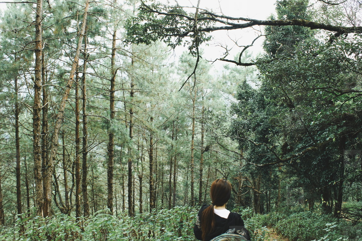 Female hiker walking in forest 1