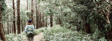 Female hiker walking in forest 2