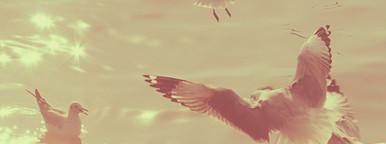 Seagulls over the sea