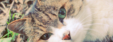 Cute cat in garden