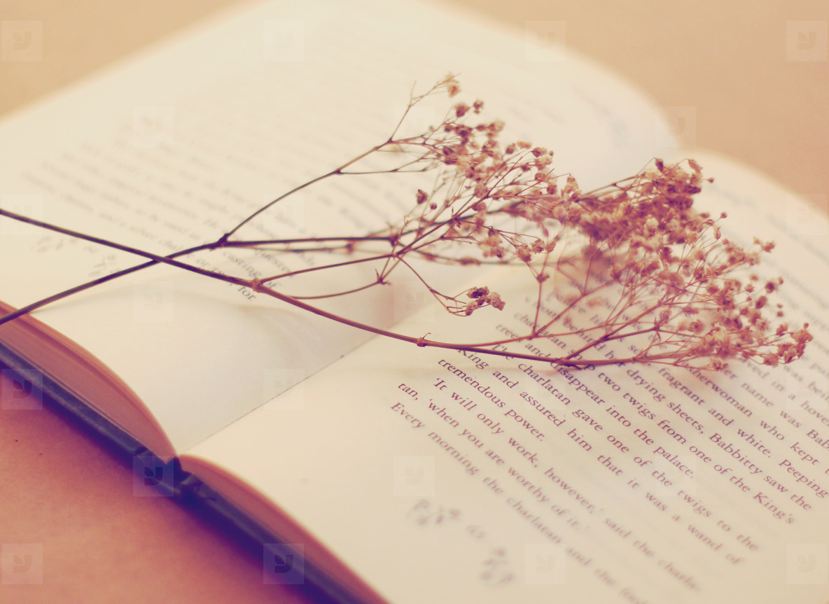 Old book with dried flowers