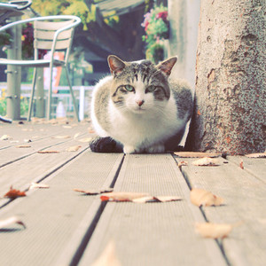 Cute cat lying in the garden