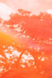 Orange impression