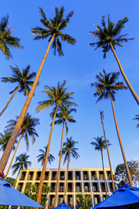 Tall Palm Trees  1