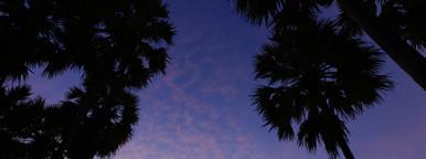 Sugar Palm  Sunrise   2