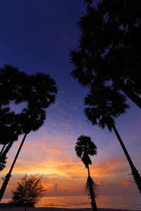 Sugar Palm  Sunrise   2