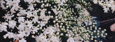 Little white flowers  1