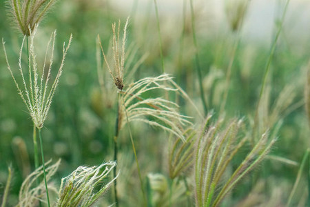 Field of grasses