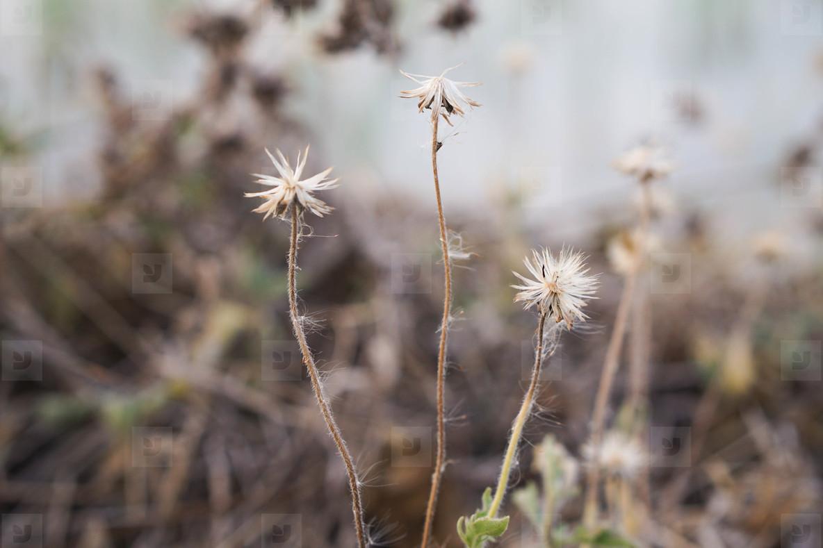Autumn dry grasses