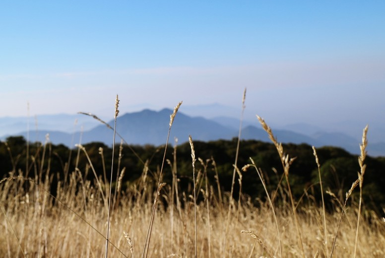 Grasses field on the mountain