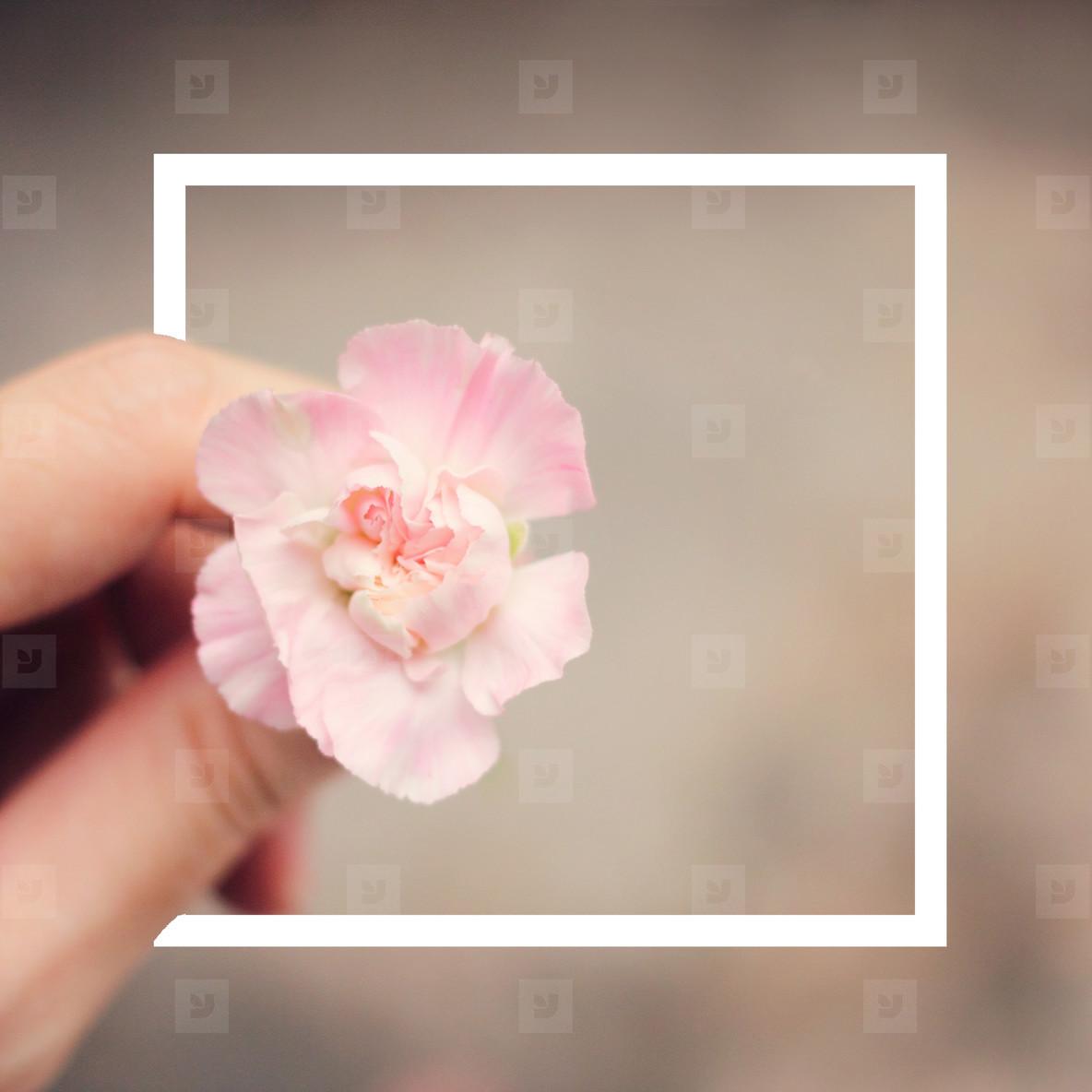 design frame label and flower