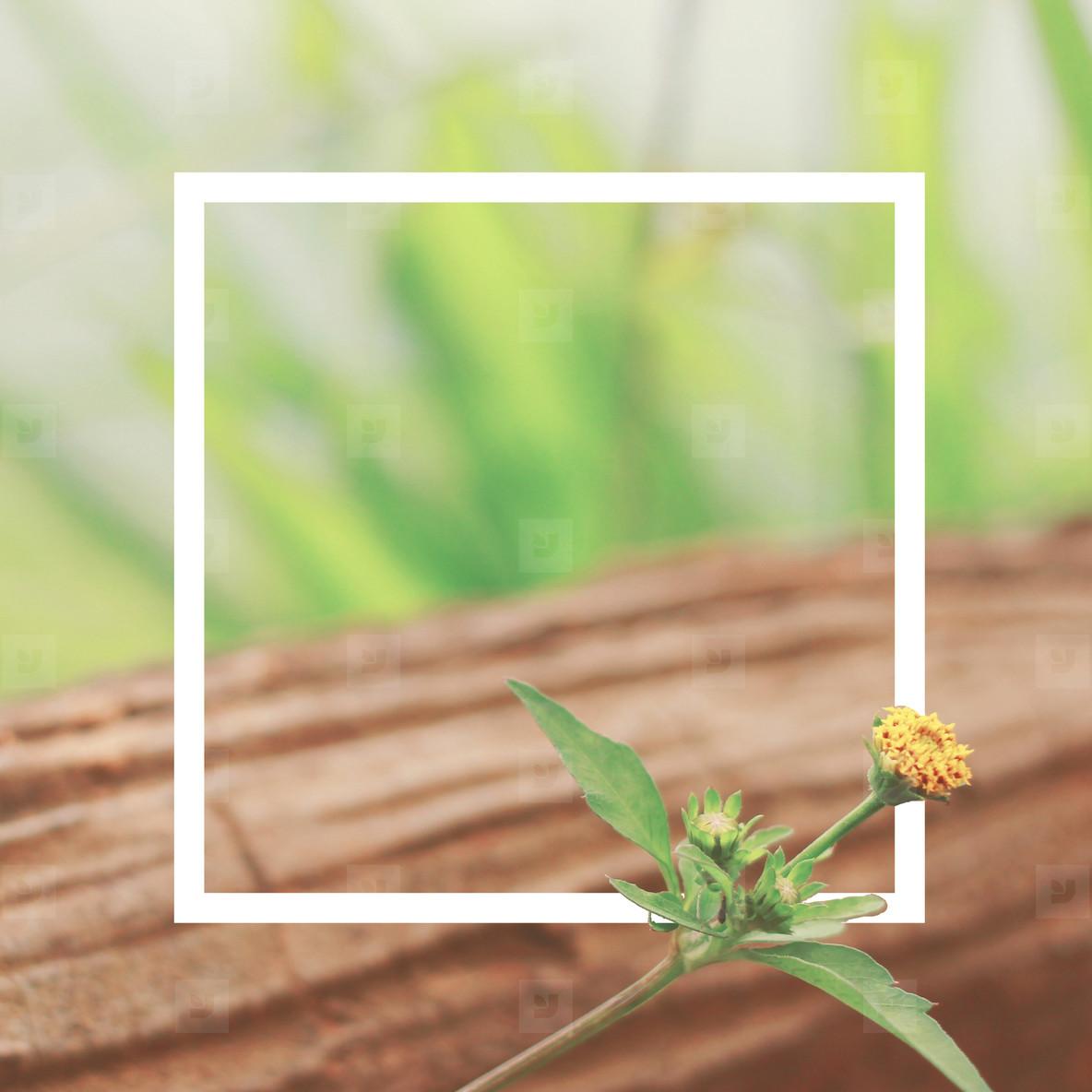 little flower and design frame