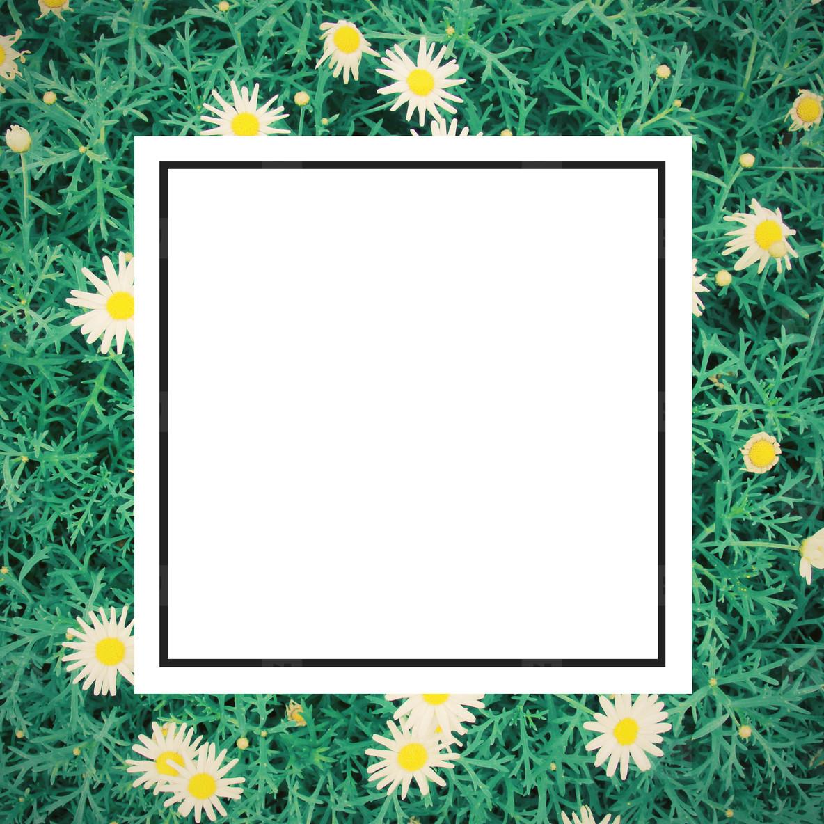 daisy flowes and design frame