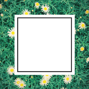 daisy flowes and design frame