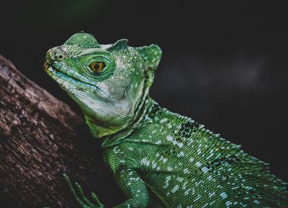Reptile Closeup