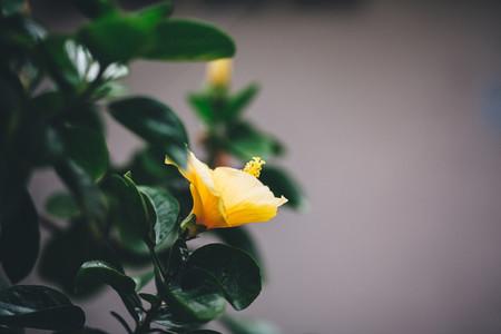 Asian Botanical