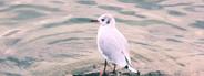Marine gull on rest
