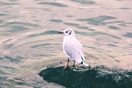 Marine gull on rest