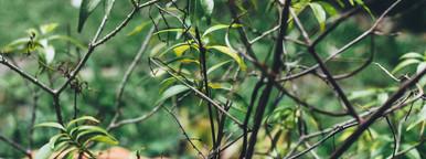 Asian Garden Plants