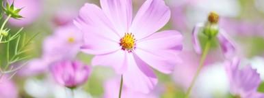 Beautiful Pink Flowers  1