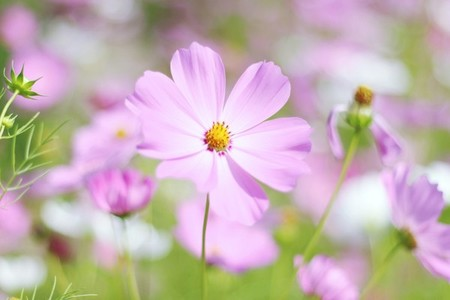 Beautiful Pink Flowers 1
