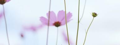 Beautiful Pink Flowers  2
