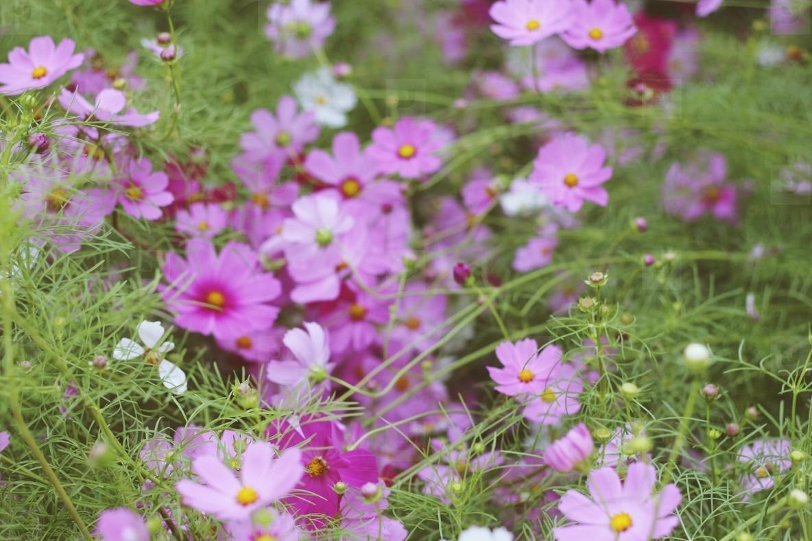 Beautiful Pink Flowers  4