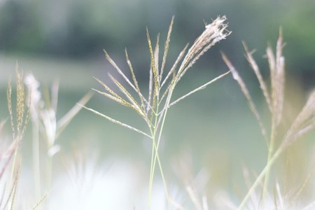Field of grasses 2