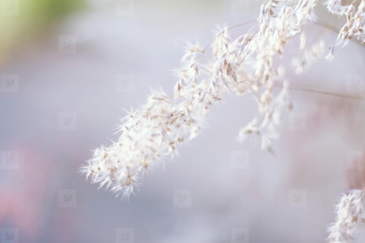 Grass wisp