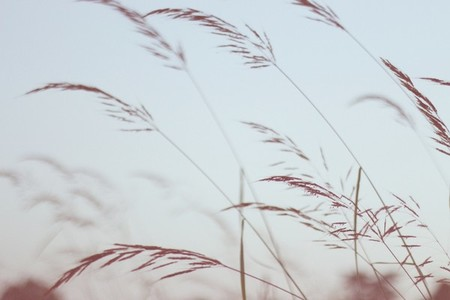 Field of grasses  5