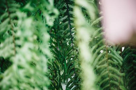 Plant Bokeh