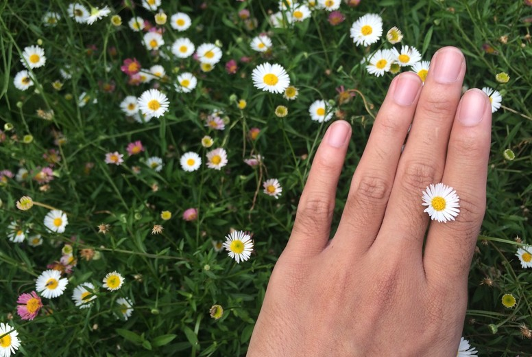 White Daisy flower and hand
