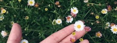 Hand holding White Daisy flower