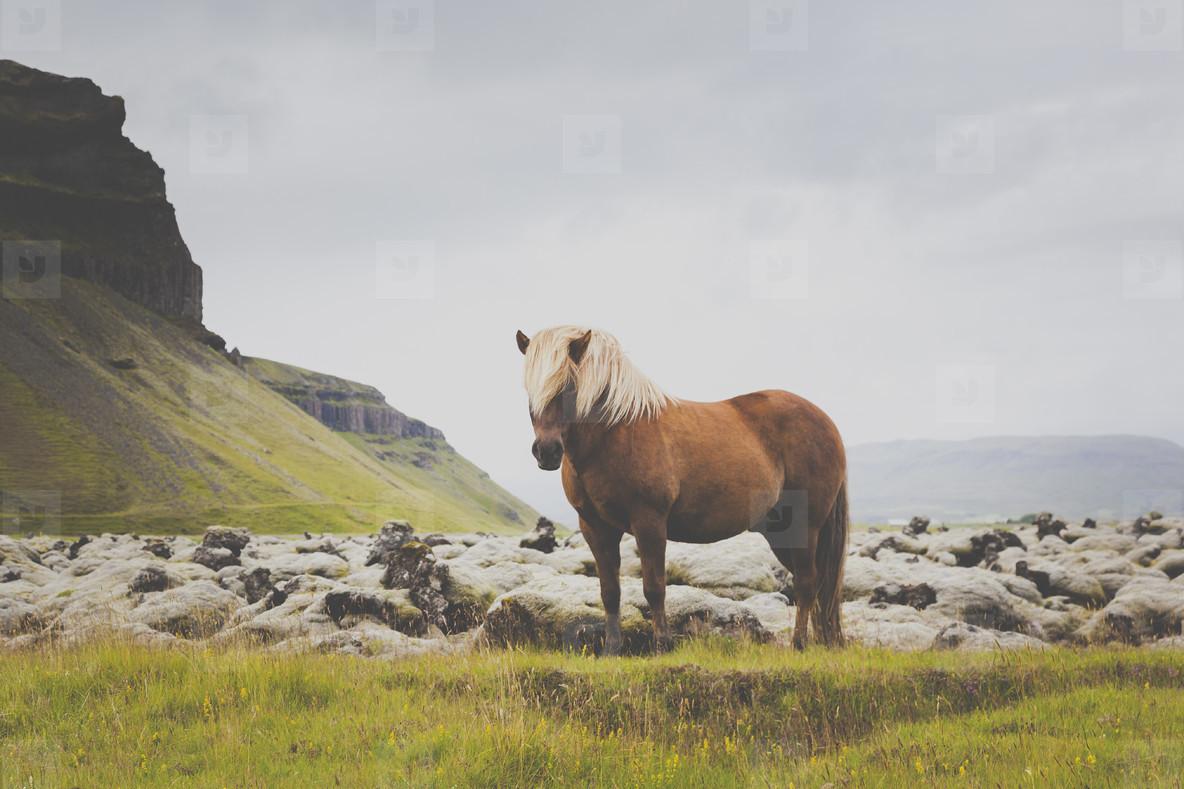 Handsome Horse