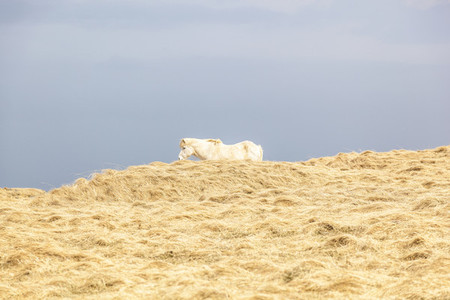 Hiding Horse