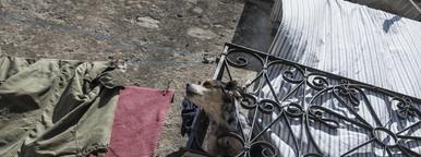 Curiosity kills the dog