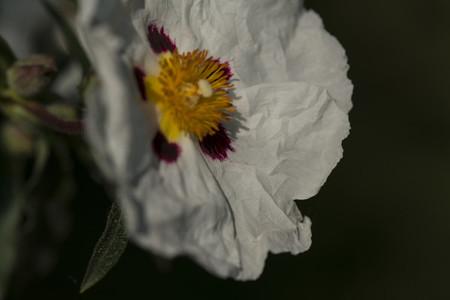 Crumpled petal