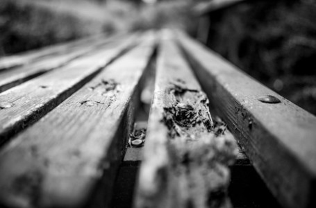 Old BW Bench