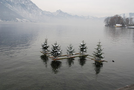 Swimming christmas trees