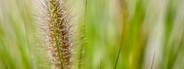 Grass   makro