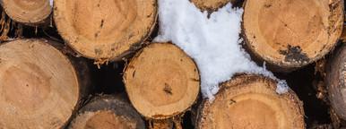 Staple wood