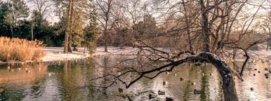 Park in vienna   water