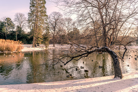 Park in vienna   water
