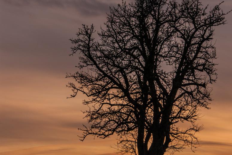 Tree   sunset   autumn
