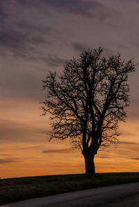 Tree  sunset  autumn