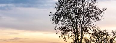 old farm   tree