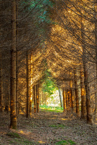 Tunnel of trees  fores