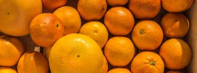 fresh oranges    grapefruits