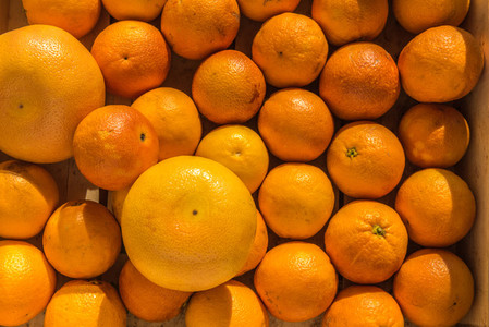 fresh oranges    grapefruits